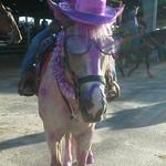 Cisco at Saddle up for the Cure day at Galveston County's Summer Series