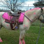 Rent a Pink Pony for your next Birthday Party