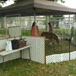 Large and Small Petting farm for Birthday Parties and Community Events
