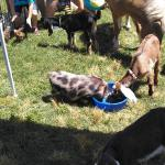 Rent a Petting Farm for your next Event